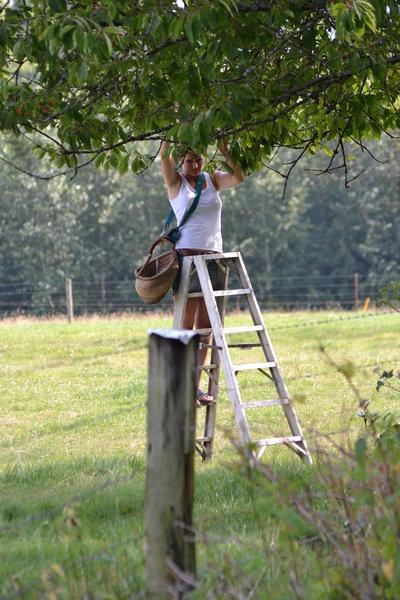 Fruitpluk op Les Hirondelles